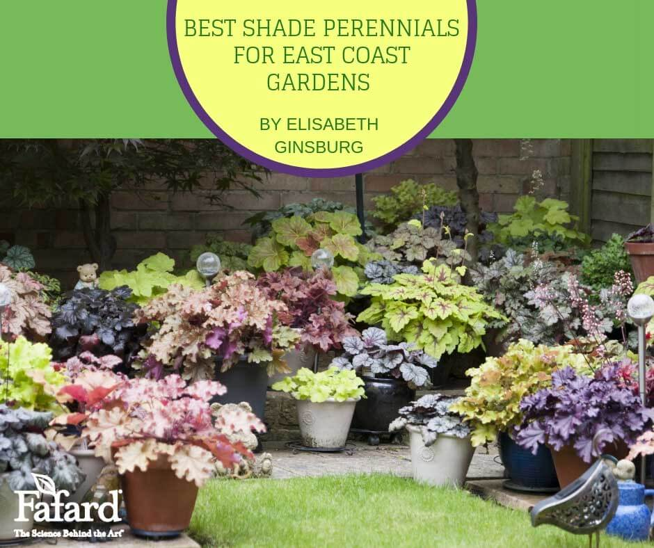 Fafard Best Shade Perennials For East Coast Gardens Fafard