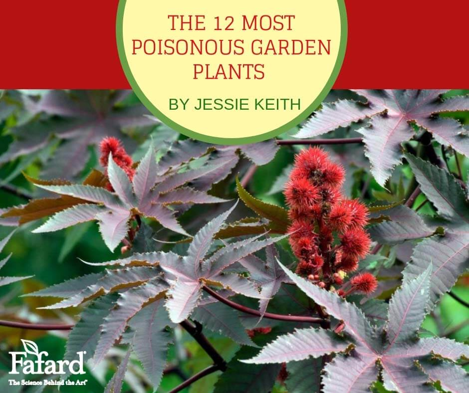 Fafard 12 Poisonous Garden Plants To Avoid For Kids And Pets Fafard