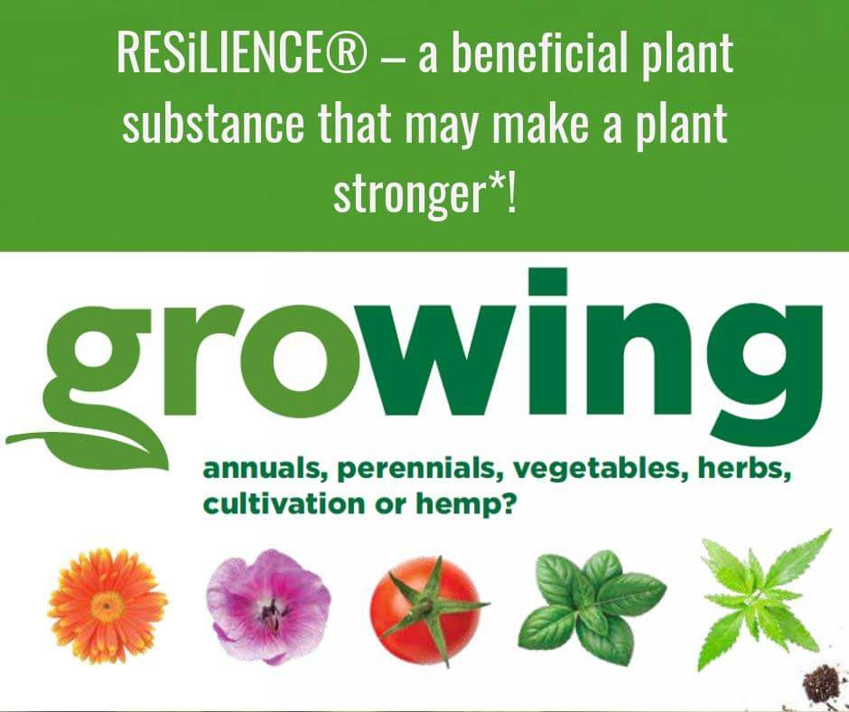 RESiLIENCE Growing annuals, perennials, vegetables, herbs, cultivation or hemp? Featured Image