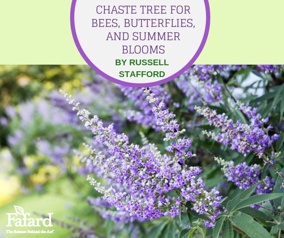 Fafard Chaste Tree For Bees Butterflies And Summer Blooms Fafard