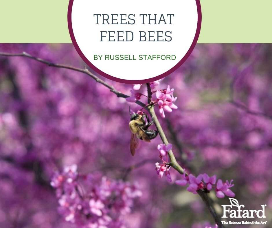 Tees that Feed Bees Featured Image