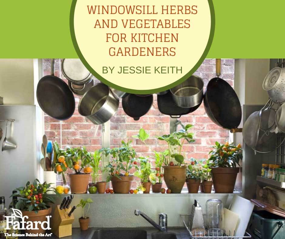 Windowsill Herbs and Vegetables for Kitchen Gardeners Featured Image
