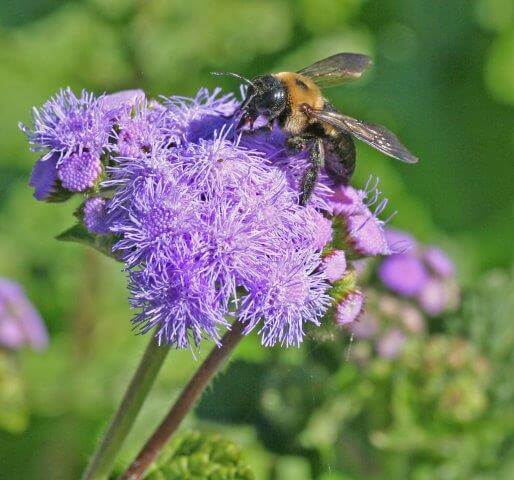 Highly fragrant flowers in blue or yellow shades that are designed for landing are bee favorites.