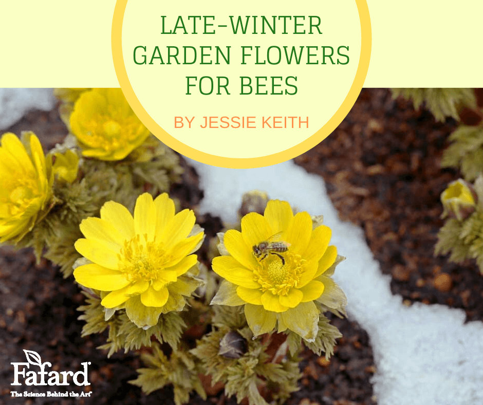 Late-Winter Garden Flowers for Bees Featured Image