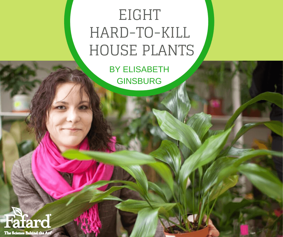 Eight Hard-To-Kill House Plants Featured Image