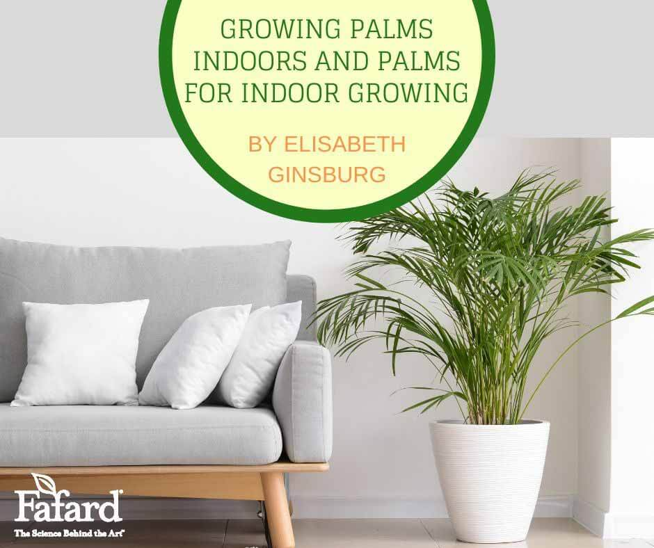 Growing Palms Indoors and Palms for Indoor Growing Featured Image