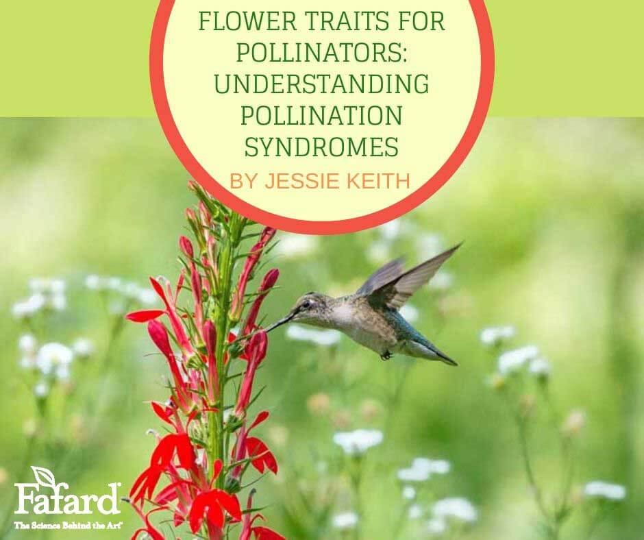 Flower Traits for Pollinators: Understanding Pollination Syndromes Featured Image
