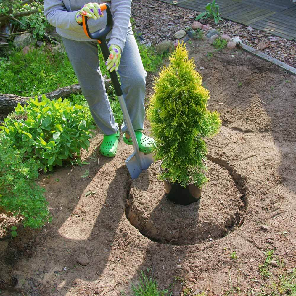 Creating a broad planting hole
