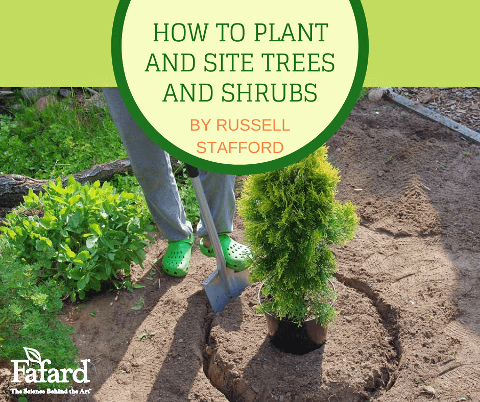 How to Plant and Site Trees and Shrubs Featured Image