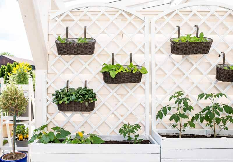 Deck baskets hanging from a trellis
