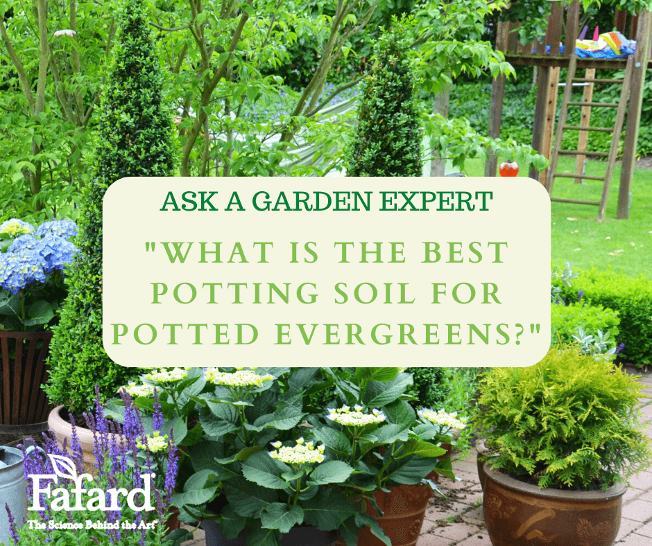 "Ask a Garden Expert ""What is the Best Potting Soil for Potted Evergreens?"" Featured Image"