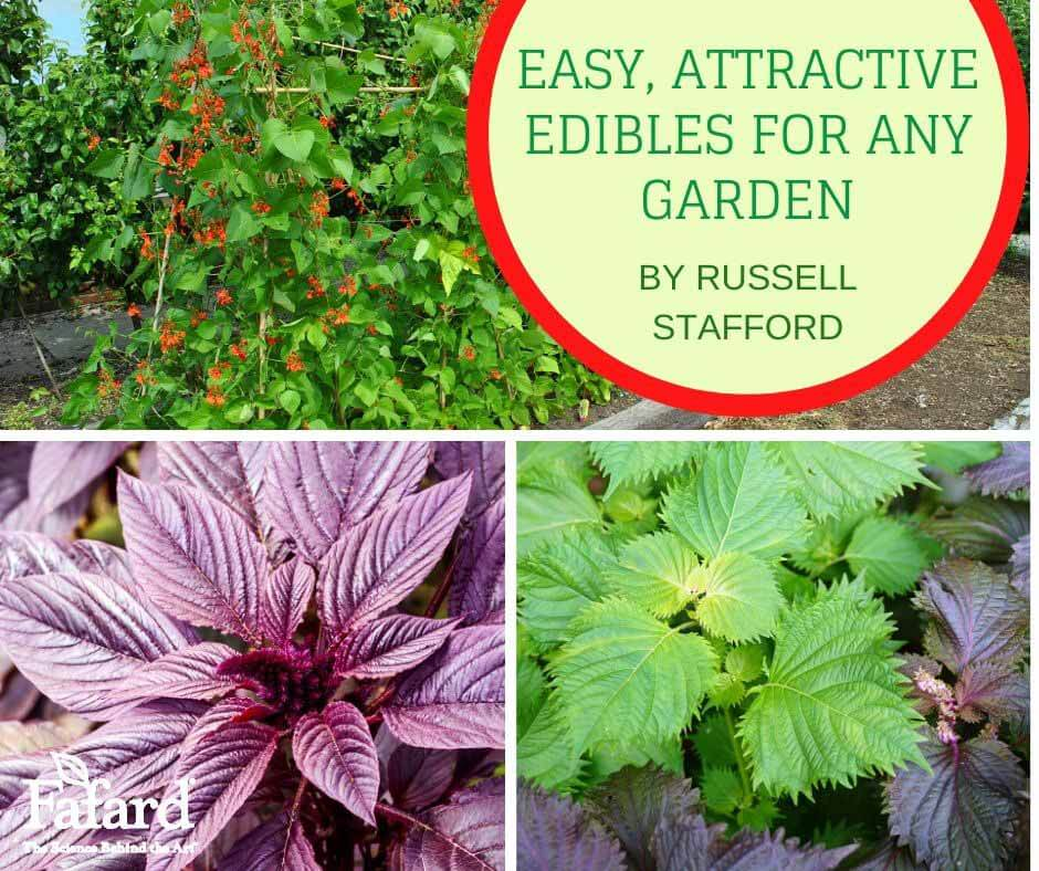 East, Attractive Edibles for Any Garden Featured Image