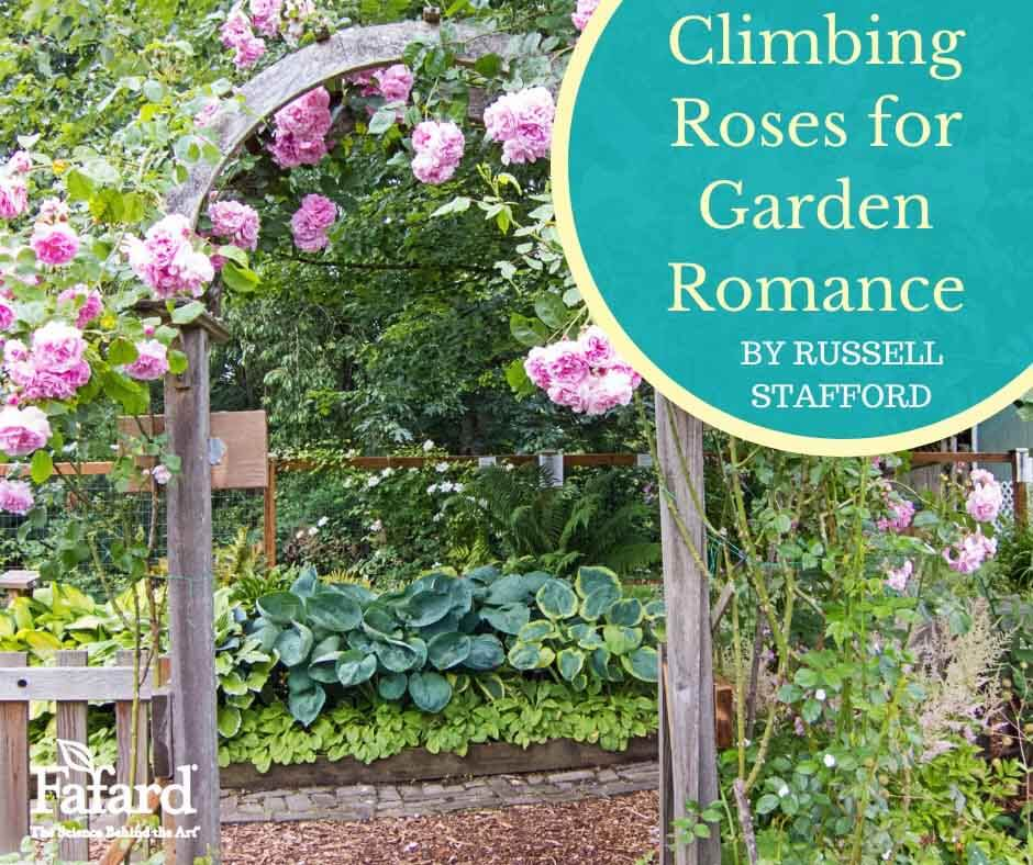 Climbing Roses for Garden Romance Featured Image