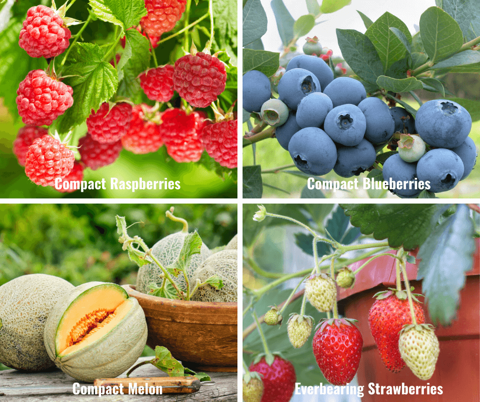 Compact Raspberries, Compact Blueberries, Compact Melon, Everbearing Strawberries