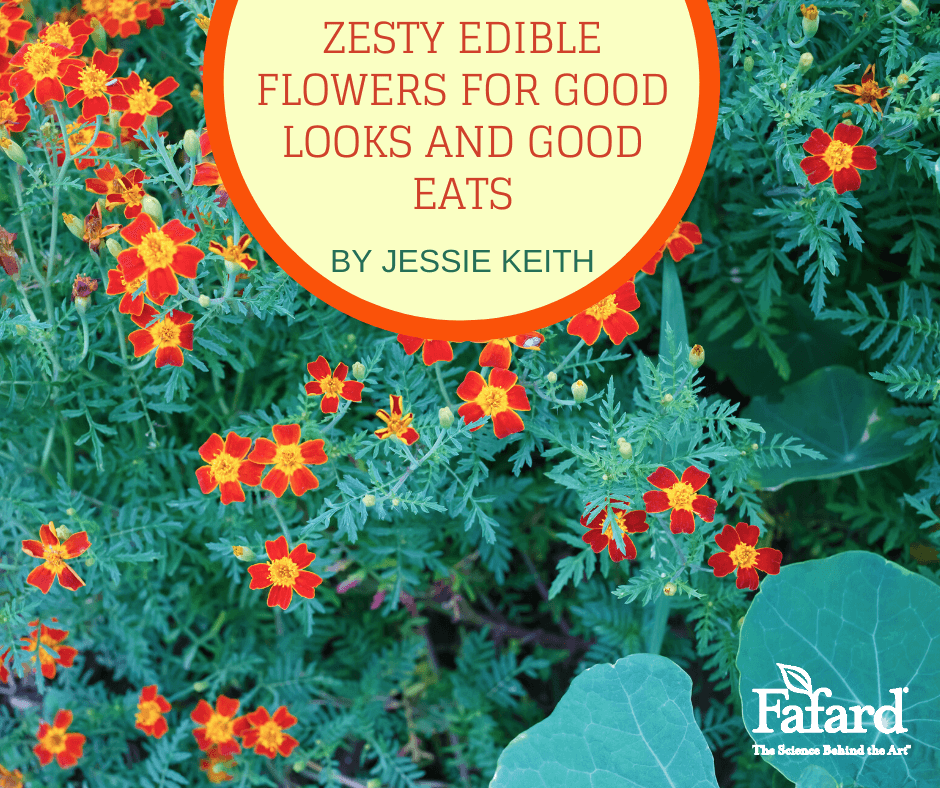 Zesty Edible Flowers for Good Looks and Good Eats Featured Image