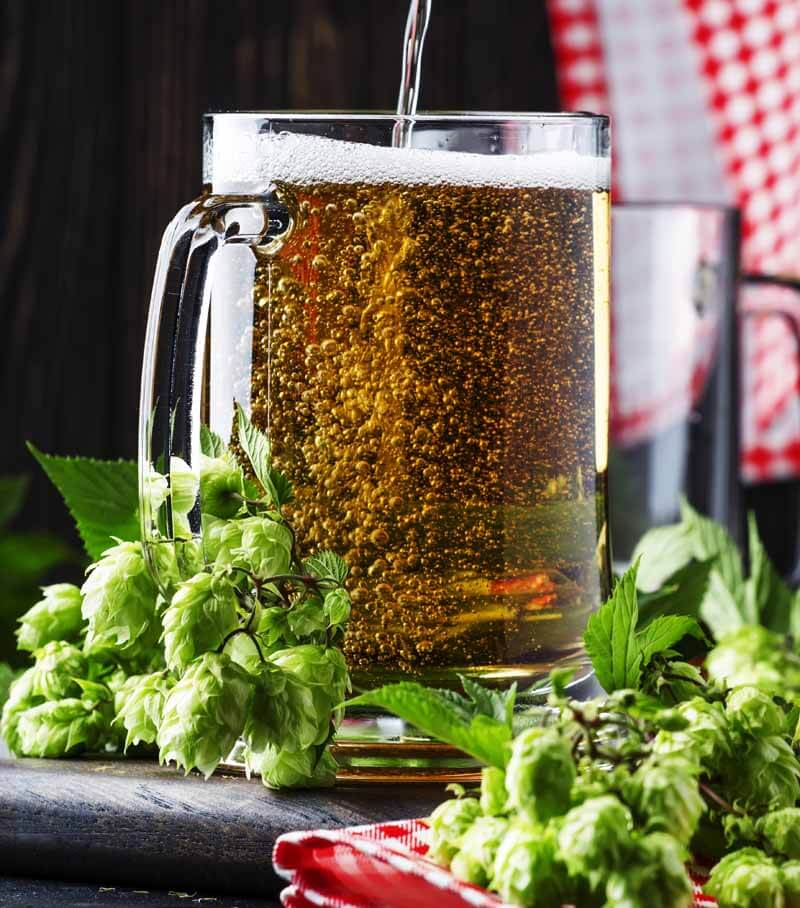 Hops with a glass of beer