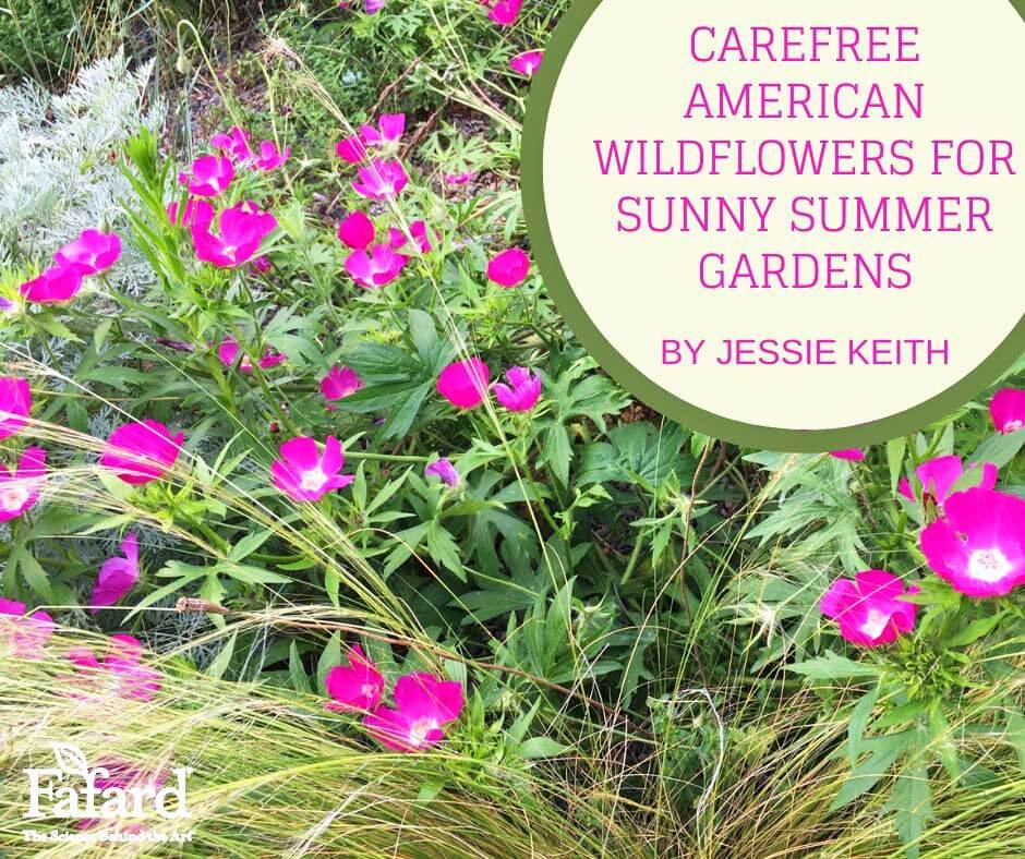 Carefree American Wildflowers for Sunny Summer Gardens Featured Image