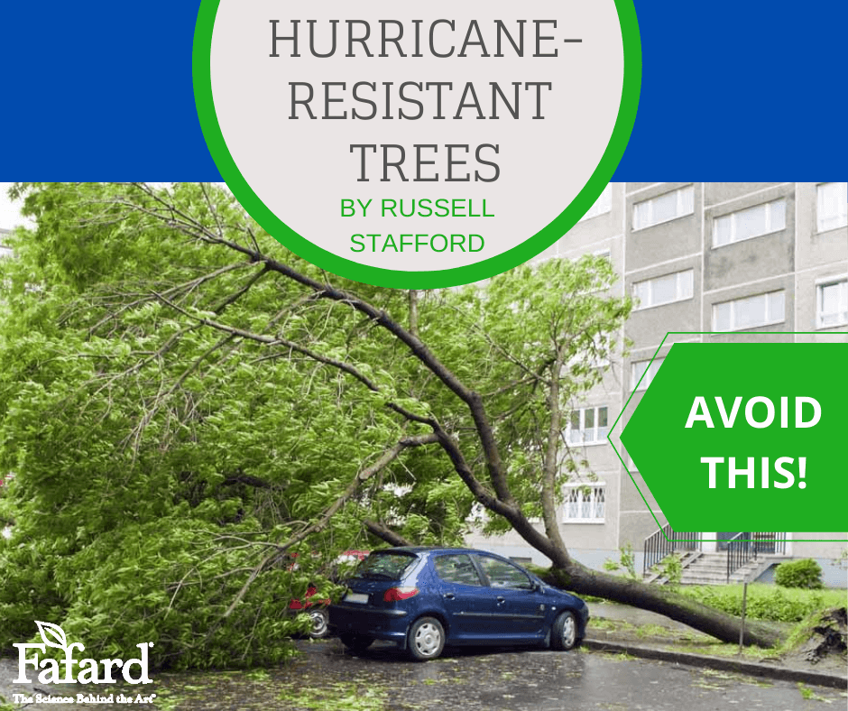 Hurricane-Resistant Trees Featured Image