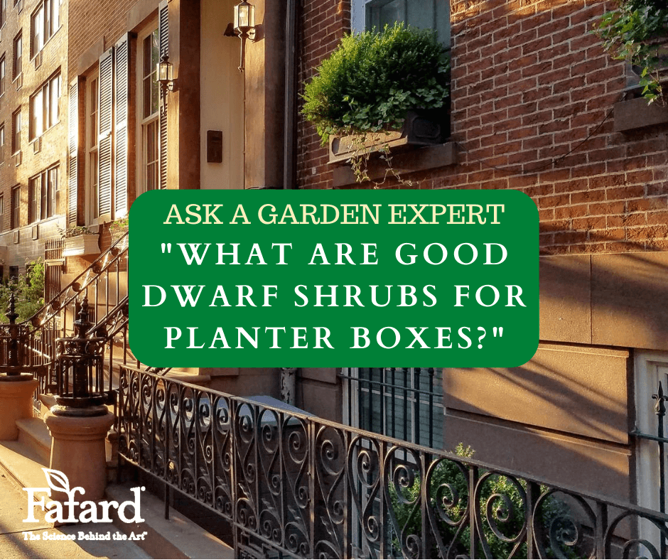"Ask a Garden Expert ""What are Good Dwarf Shrubs for Planter Boxes?"" Featured Image"