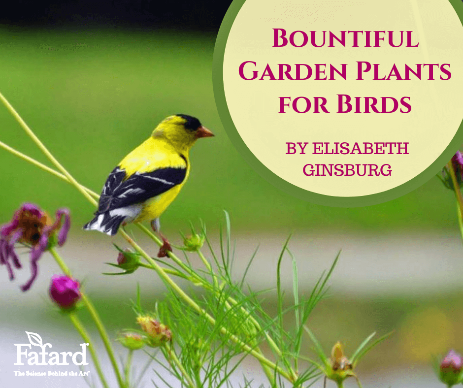 Bountiful Garden Plants for Birds Featured Image