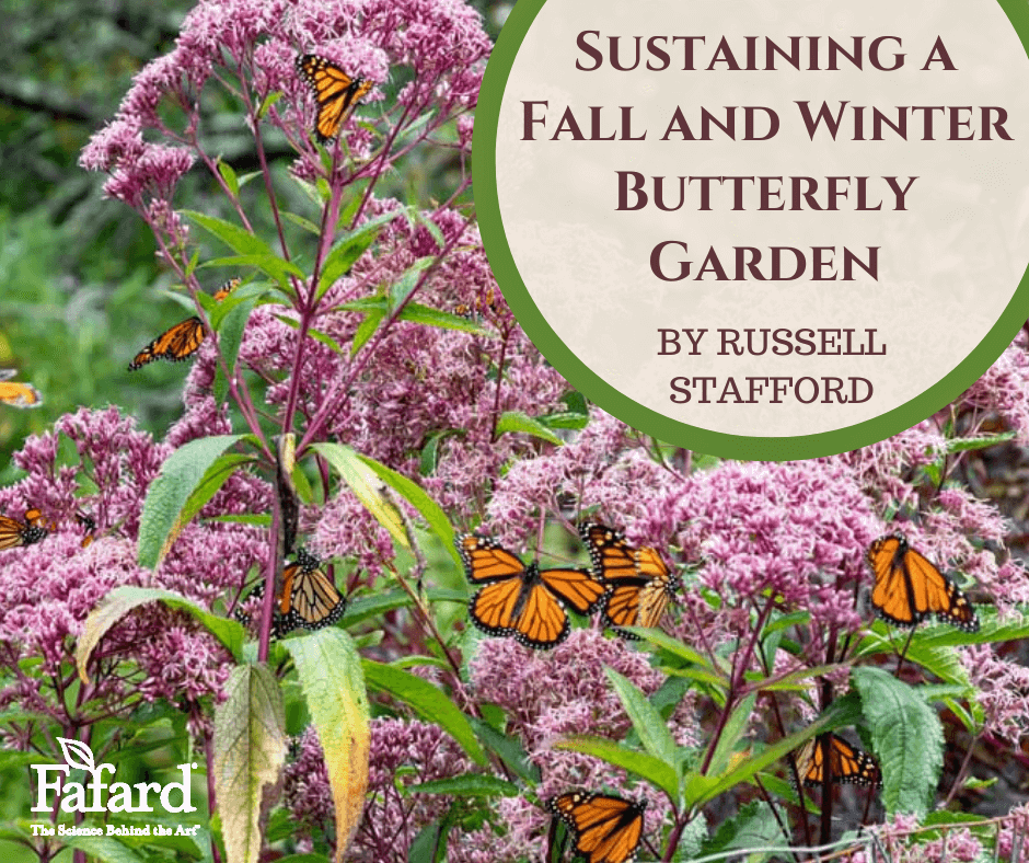 Sustaining a Fall and Winter Butterfly Garden Featured Image