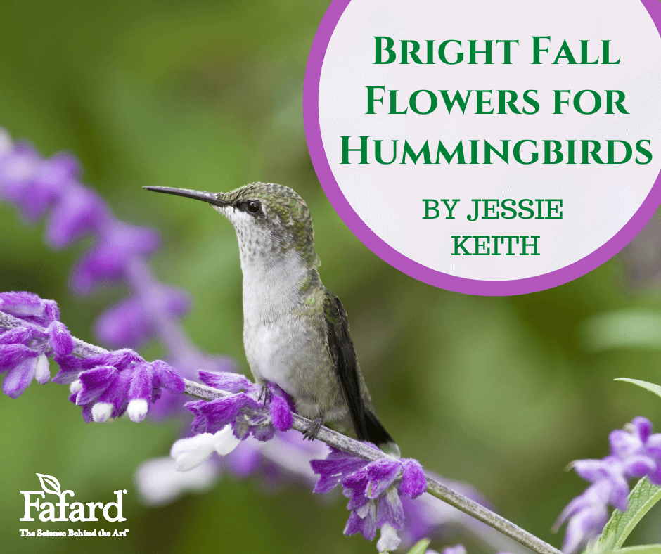 Bright Fall Flowers for Hummingbirds Featured Image