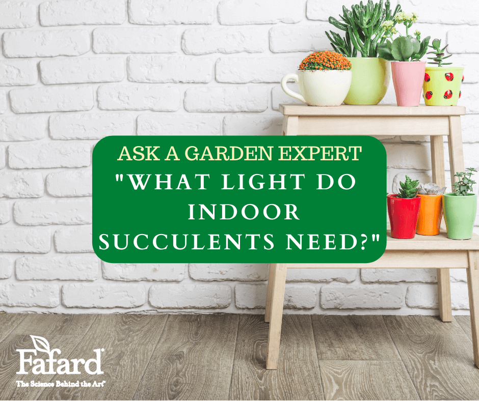 "Ask a Garden Expert ""What Light do Indoor Succulents Need?"" Featured Image"
