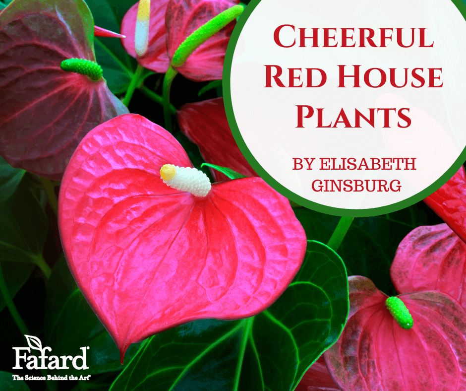 Cheerful Red House Plants Featured Image