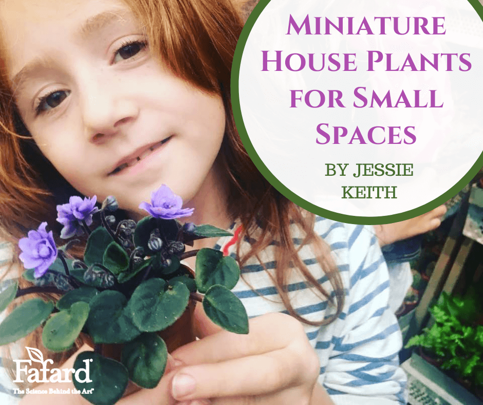 Miniature House Plants for Small Spaces Featured Image