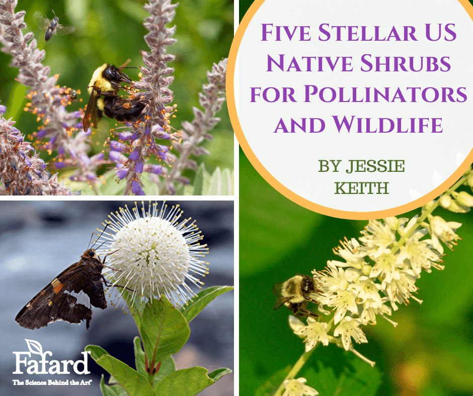 Five Stellar US Native Shrubs for Pollinators and Wildlife Featured Image