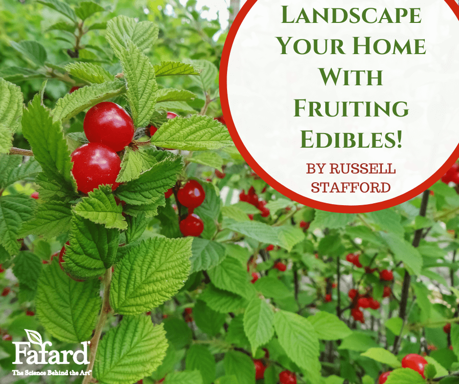 Landscape Your Home with Fruiting Edibles! Featured Image