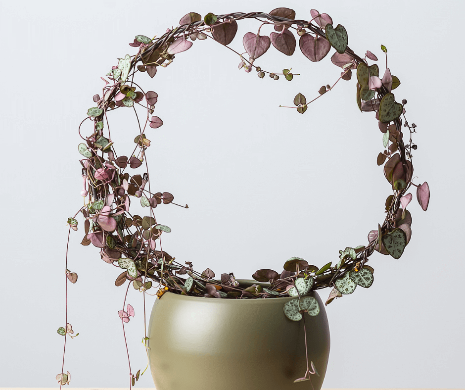 String-of-hearts wreath