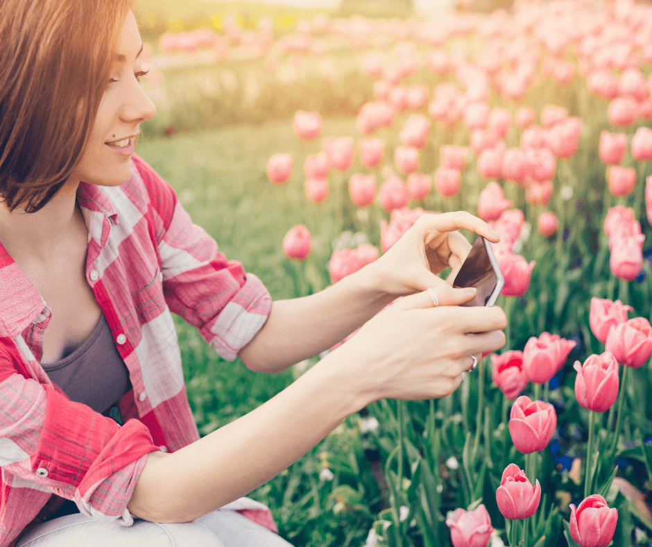 Woman taking photos of pink tulips