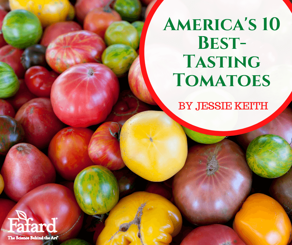 America's 10 Best-Tasting Tomatoes Featured Image